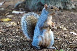 squirrel-1407699_640